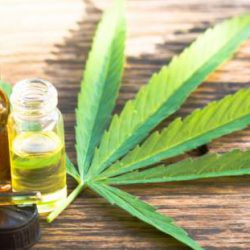 Cannabis Extract Market